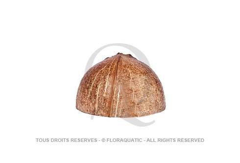 Abris noix de coco surface naturelle