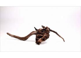 Racine Dark Moor Roots S1058