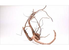 Racine Dark Moor Roots XS1044