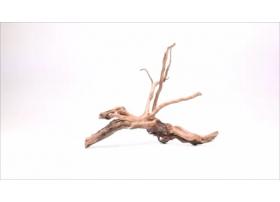 Racine Dark Moor Roots XS1049