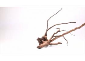 Racine Dark Moor Roots XS1052
