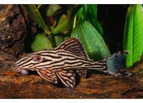 L27, Xingu, +8cm