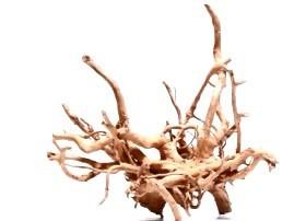 Racine Red Moor Roots