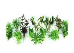 Lot de plantes d'aquarium économique