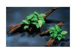 Plantes sur racines et roches