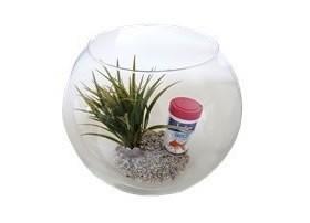Aquariums Boules