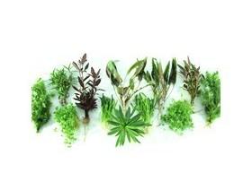 Lot de plantes pour terrarium