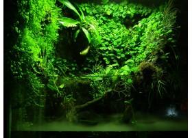 Toutes les plantes pour terrarium
